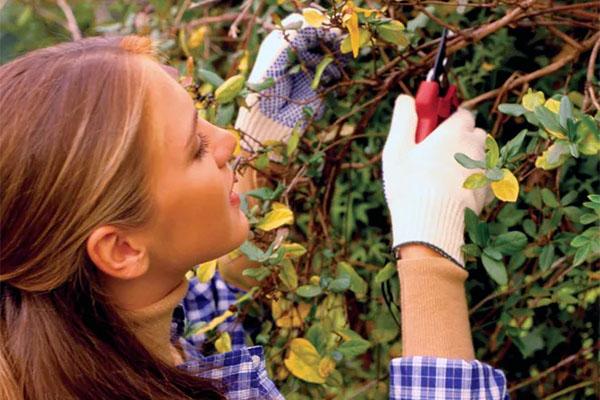 Undgå ekstra-arbejde i haven til foråret med en lille indsats nu.