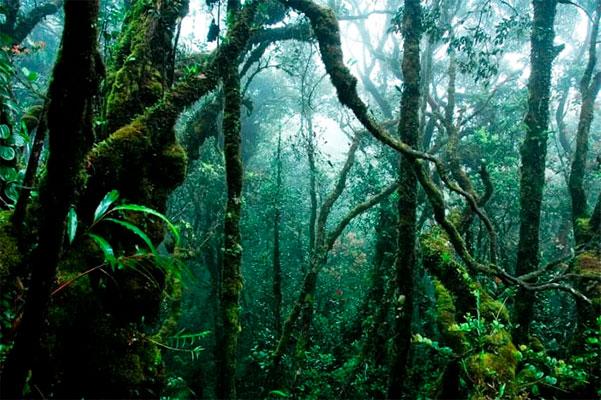 Et nyt studie viser, at regnskove, der får lov til at genskabe sig selv uden menneskelig indblanding, gør det hurtigere og er rigere på biodiversitet.